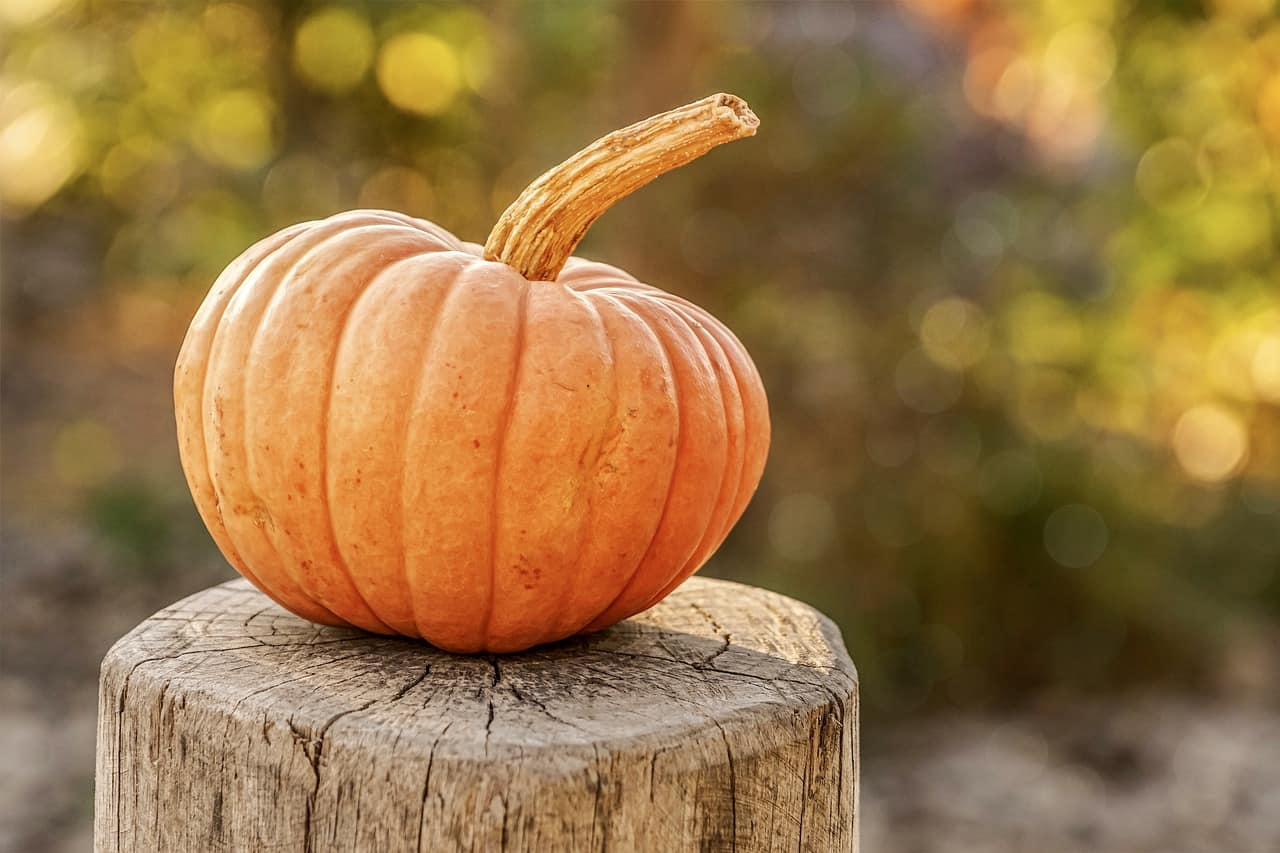 Pumpkin on the stump of a tree