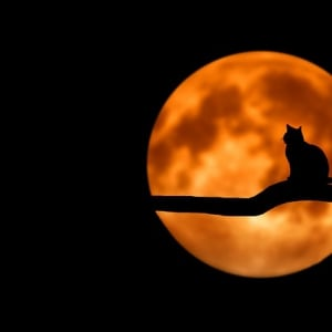 Cat sat on tree in front of full moon.