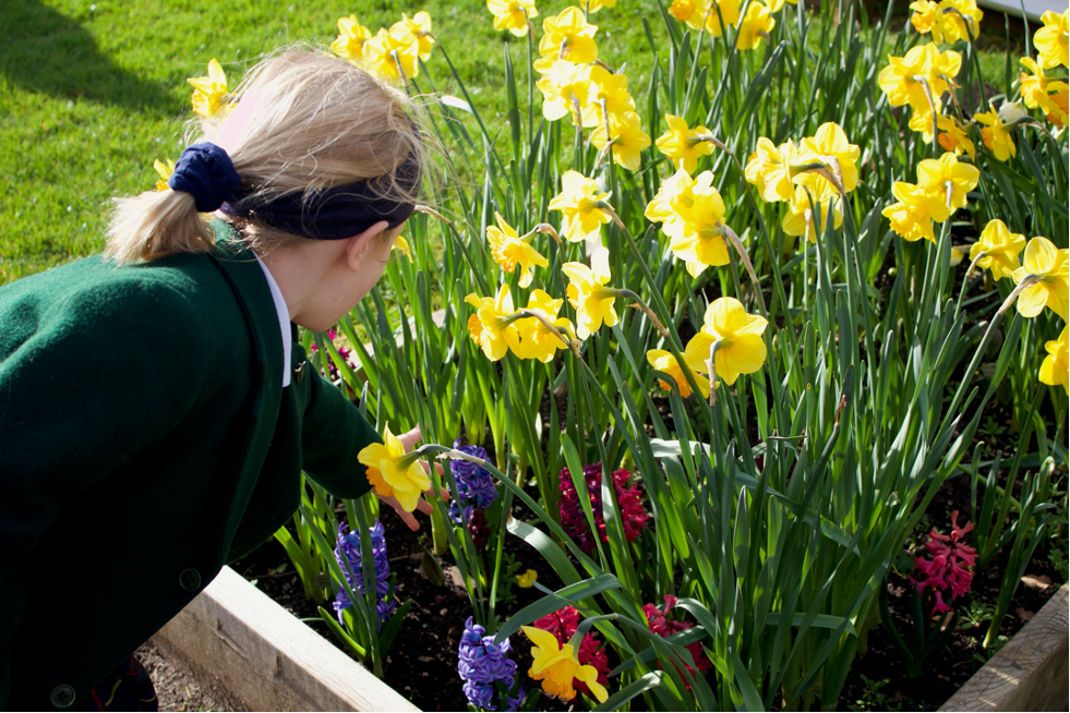 Pupil caring for flowers